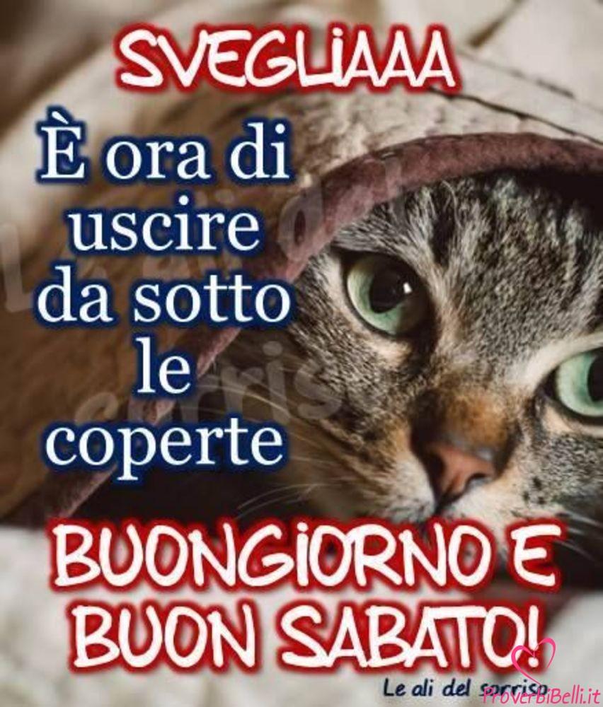 Belle-Immagini-Buongiorno-Sabato-Facebook-Whatsapp-222