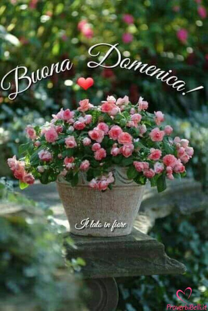 Buona-Domenica-100