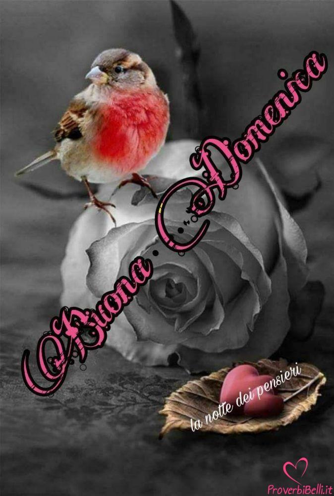 Buongiorno-Domenica-Immagini-Buona-per-Facebook-Whatsapp-762