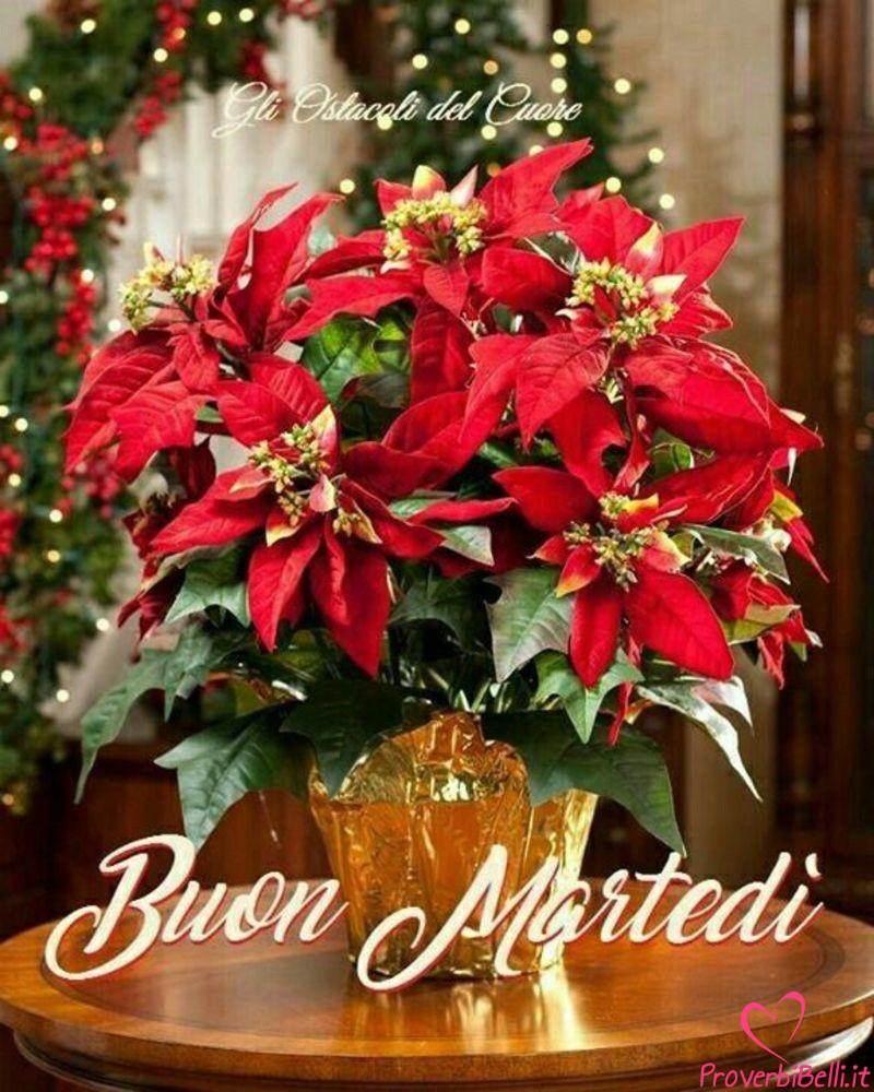 Buongiorno Immagini Natalizie.Immagini Buongiorno Martedi Natalizio Pagina 35 Di 42