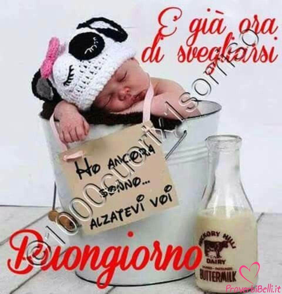 Buongiorno Topimmagini Belle Per Whatsapp Proverbibelliit