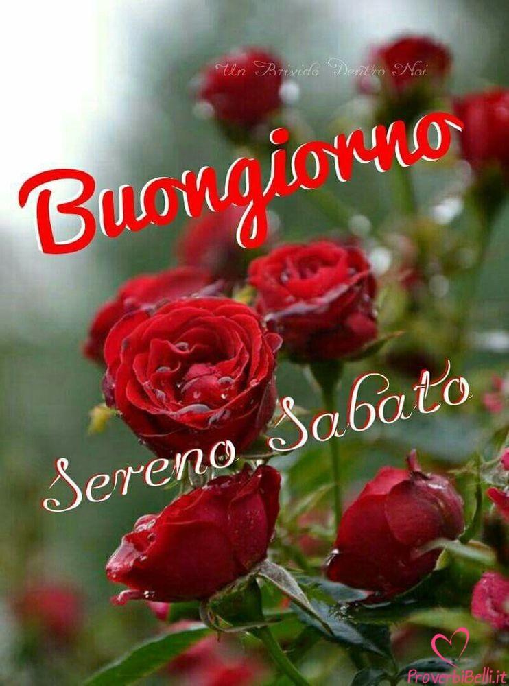 Immagini-Buongiorno-Sabato-per-Whatsapp-706