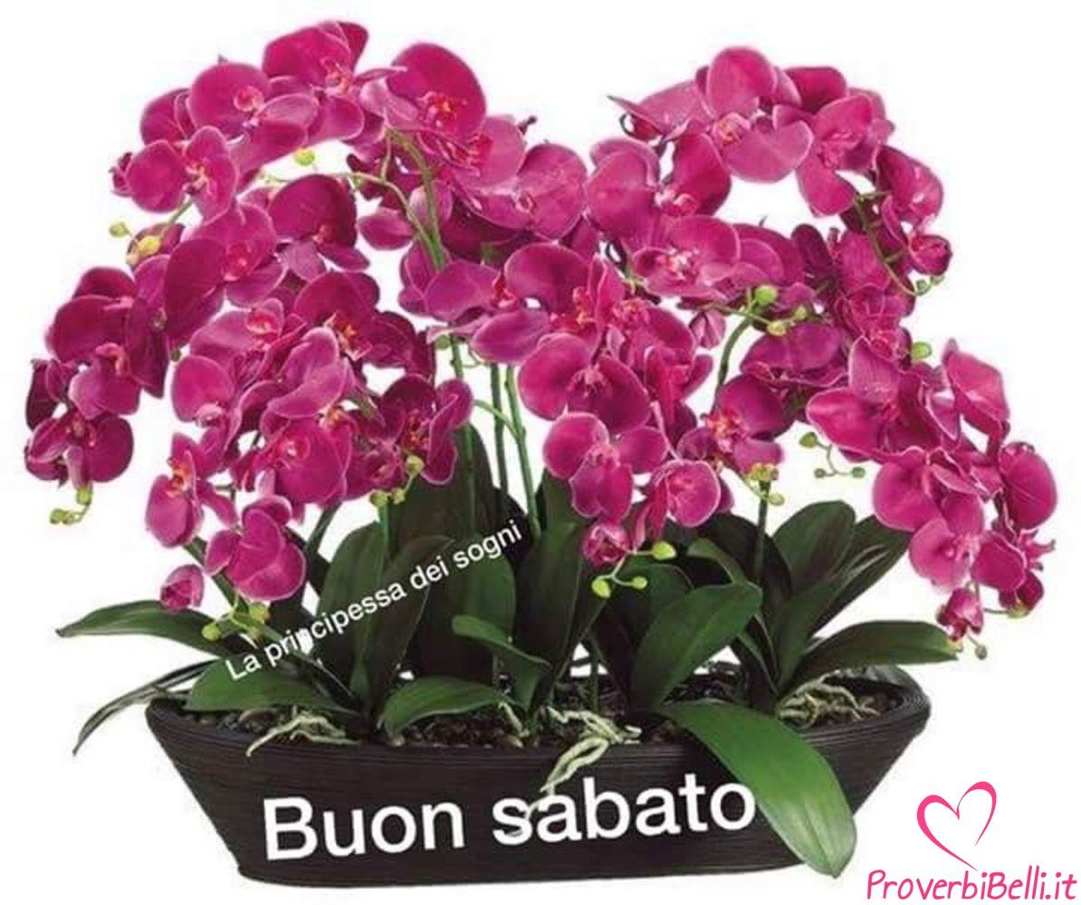 Immagini-Buongiorno-Sabato-per-Whatsapp-709