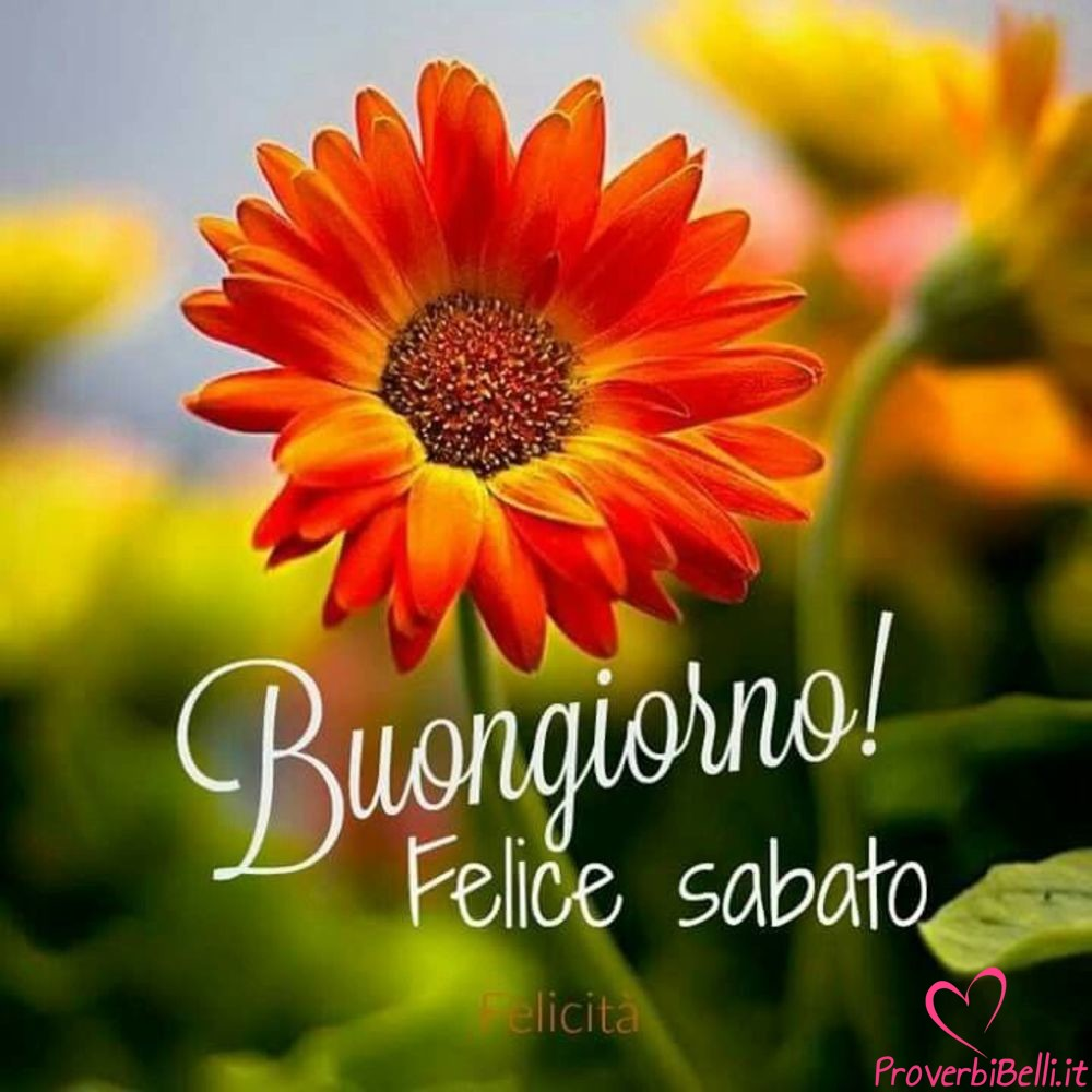Immagini-Buongiorno-Sabato-per-Whatsapp-719