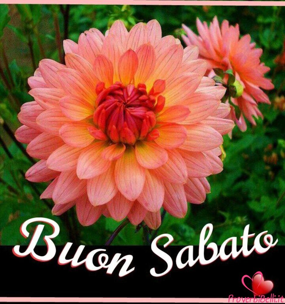 Immagini-Buongiorno-Sabato-per-Whatsapp-730