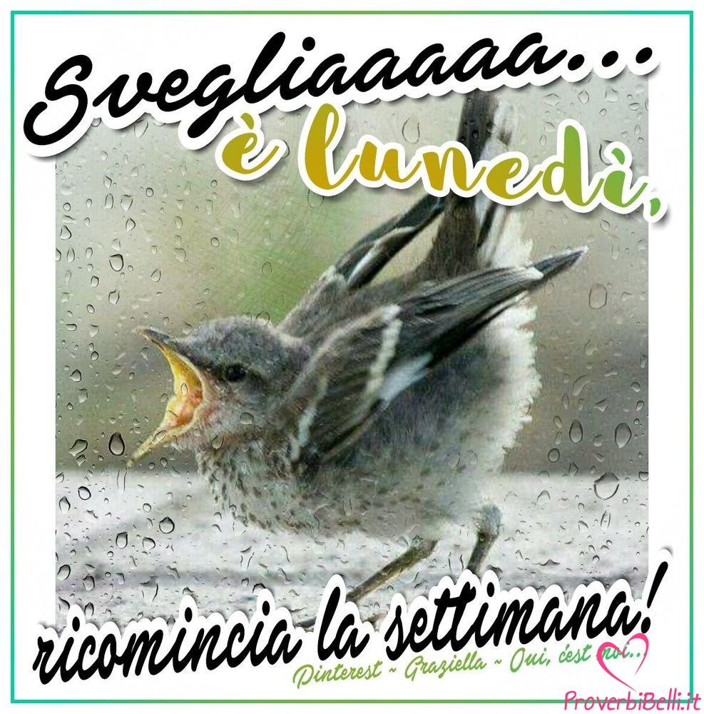 Lunedì-Immagini-belle-whatsapp-558