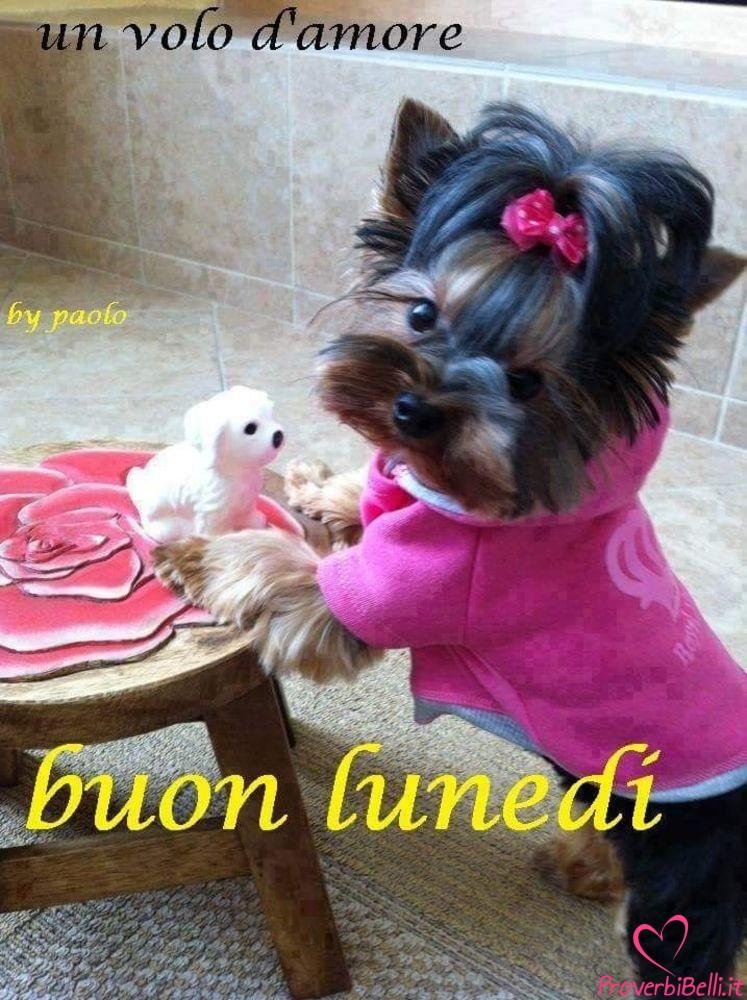 Lunedì-Immagini-belle-whatsapp-573